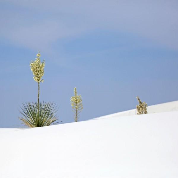 ホワイトサンズ ニューメキシコ州