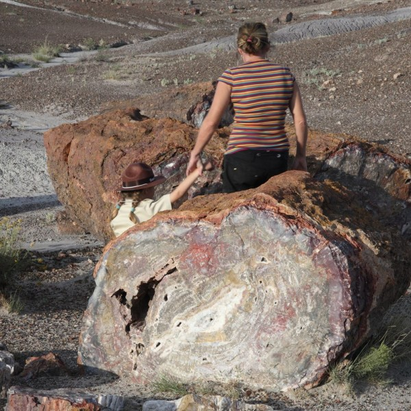化石の森国立公園 ジュラ紀の世界 アリゾナ州